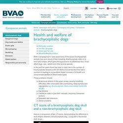 BVA policy - brachycephalic dogs