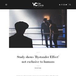 Study shows 'Bystander Effect' not exclusive to humans