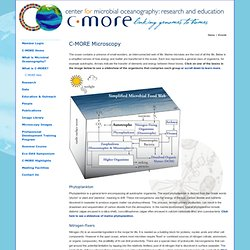 C-MORE | Events