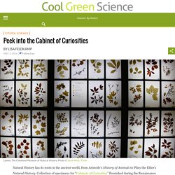Peek into the Cabinet of Curiosities – Cool Green Science