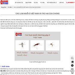 Các loại muỗi thường gặp ở Việt Nam và tác hại của chúng