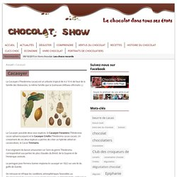 Cacaoyer - Chocolat-Show