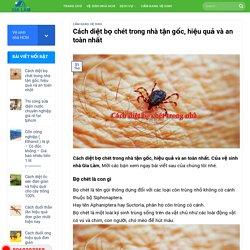 Cách diệt bọ chét trong nhà tận gốc, hiệu quả và an toàn nhất