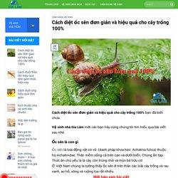 Cách diệt ốc sên đơn giản và hiệu quả cho cây trồng 100%