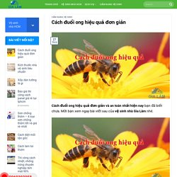 Cách đuổi ong hiệu quả đơn giản và an toàn nhất hiện nay