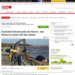 Cachalot échoué près du Havre: ses dents en ivoire ont été volées