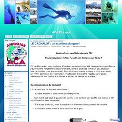 LE CACHALOT : un excellent plongeur ! - ACA Plongée
