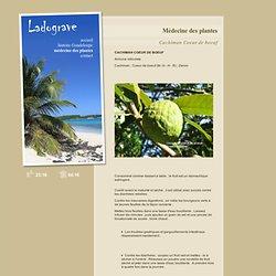 Cachiman Coeur de boeuf - Médecine des plantes - LADOGRAVE