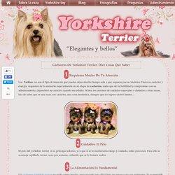 Cachorros de Yorkshire Terrier: Diez cosas que saber - Blog sobre la raza Yor...