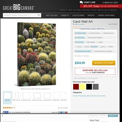 Cacti Photo Canvas Print