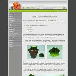 Propagation Cacti & Succulents