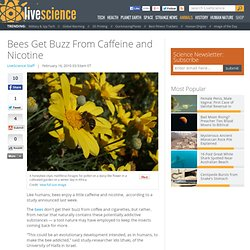 Bees Get Buzz From Caffeine and Nicotine