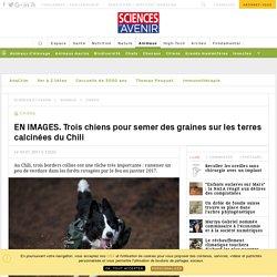 EN IMAGES. Trois chiens pour semer des graines sur les terres calcinées du Chili - Sciencesetavenir.fr