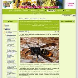 Un calendrier pour piéger le frelon asiatique - Abeilles mayennaises
