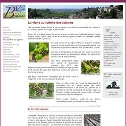Le calendrier du vigneron - Découverte du vignoble de Bordeaux