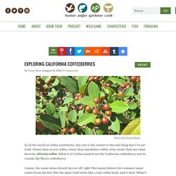 Making Coffee from California Coffeeberry, Rhamnus Rubra