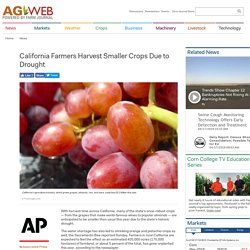 #7 California Farmers Harvest Smaller Crops Due to Drought