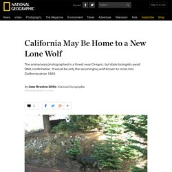 California May Be Home to a New Lone Wolf