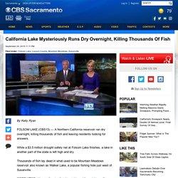 California Lake Mysterious Runs Dry Overnight, Killing Thousands Of Fish