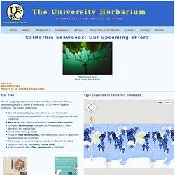 California Seaweed eFlora