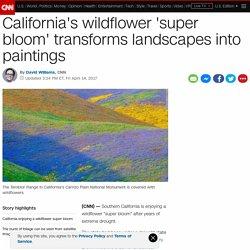 California wildflower erupt in super bloom