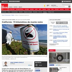 Californie: 15 kilomètres de marée noire