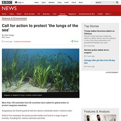 Call for action to protect 'the lungs of the sea'