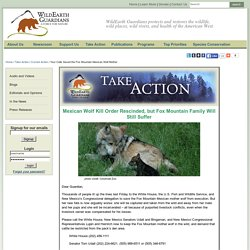 Your Calls Saved the Fox Mountain Mexican Wolf Mother