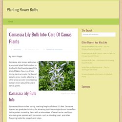 Camas Plant Care – Tips For Growing Camassia Bulbs