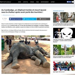 Au Cambodge, un éléphant tombe et meurt épuisé sous la chaleur après avoir porté des touristes !