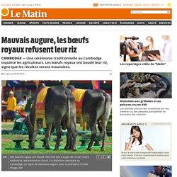 Cambodge: Mauvais augure, les bœufs royaux refusent leur riz - Société
