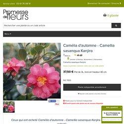 Le Camellia sasanqua Kanjiro, arbuste à grandes fleurs parfumées rose vif, coeur jaune