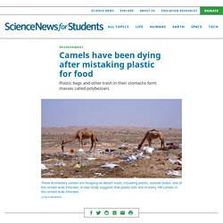 Camels have been dying after mistaking plastic for food