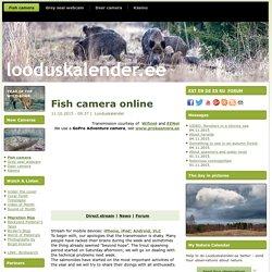 Fish camera online