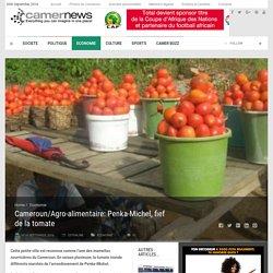 Cameroun/Agro-alimentaire: Penka-Michel, fief de la tomate