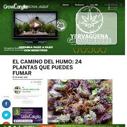 El Camino del Humo: 24 plantas que puedes fumar