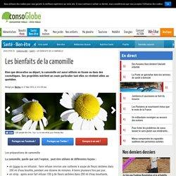 Camomille : Quels bienfaits santé et beauté ?