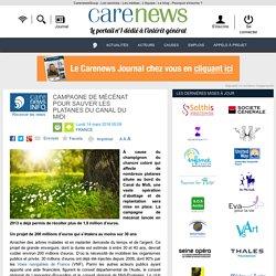 Campagne de mécénat pour sauver les platanes du Canal du Midi