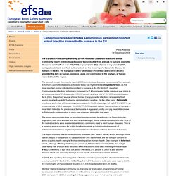 EFSA 14/12/06 Campylobacteriosis overtakes salmonellosis as the most reported animal infection transmitted to humans in the EU