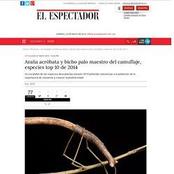 Araña acróbata y bicho palo maestro del camuflaje, especies top 10 de 2014
