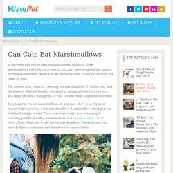 Can Cats Eat Marshmallows - WewPet