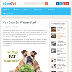 Can Dogs Eat Watermelon? - WewPet