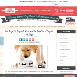 Can Dogs Eat Yogurt? What are The Benefits of Yogurt for Dogs
