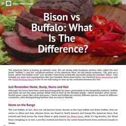 Bison Meat Canada - Bison vs Buffalo: What Is The Difference?
