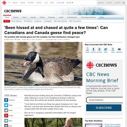 'Been hissed at and chased at quite a few times': Can Canadians and Canada geese find peace? - CBC News - Latest Canada, World, Entertainment and Business News