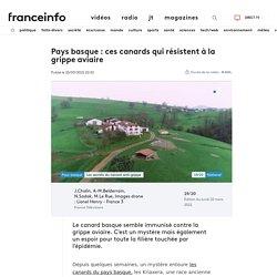 FRANCE INFO 22/03/21 Pays basque : ces canards qui résistent à la grippe aviaire