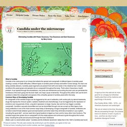 Candida under the microscope