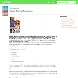 Canine Asthma Symptoms
