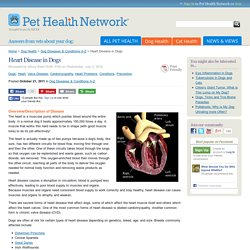 Canine Heart Disease - Cardiac Illness in Dogs