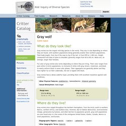 Critter Catalog, Canis lupus, gray wolf